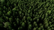 Balloon Flight over the forest video