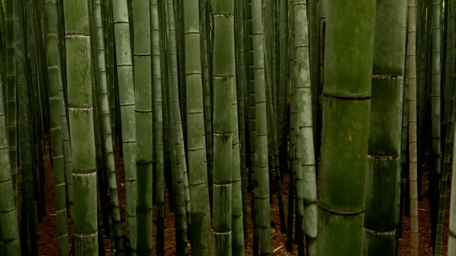 Bamboo Forest in Kyoto, Japan. video
