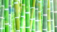 Bamboo forest, upward video