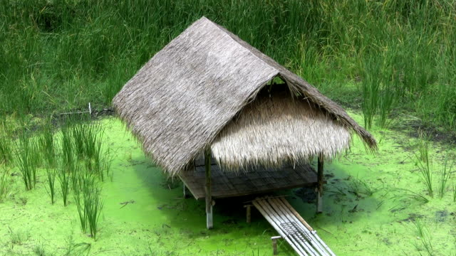 Bamboo Grass Hut Over A Swamp video