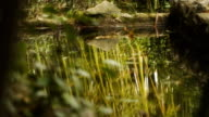 Bamboo Grove is reflected in the water video