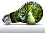 Bamboo inside light bulb - NTSC video