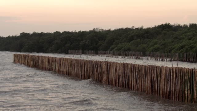 Bamboo stick lined up to protect the coastal erosion video