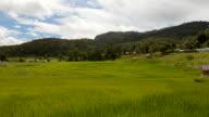 Ban Mae Klang Luang rice paddy video