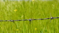 Barbed wire with green grass on background. video