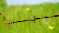 Barbed wire with green grass video