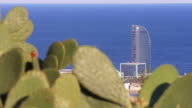 barcelona sunny day montjuic park cactus view on famous beach hotel 4k spain video