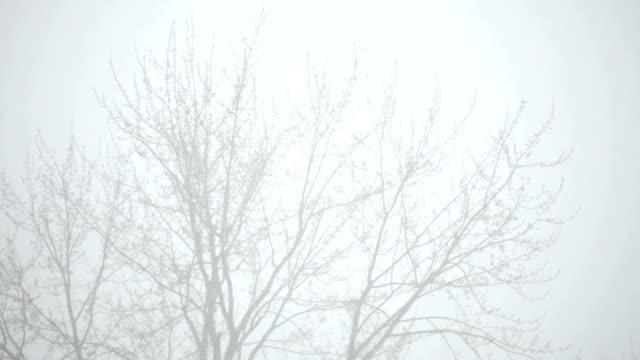 Bare Tree in Blizzard video
