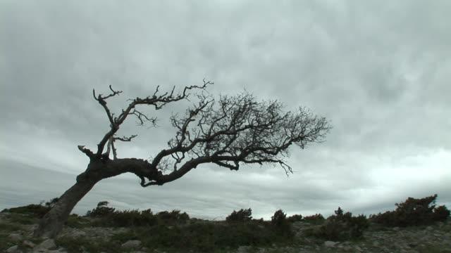 HD: Bare tree video