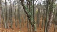 bare trees and fallen leaves on the ground video