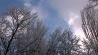 Bare winter trees with frozen twigs on windy day video