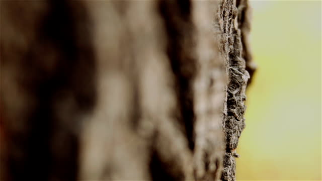 Bark of tree video