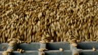 Barley falling through bars video