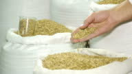 Barley malt in bags. The production of beer. Grain. Raw materials for brewing. Barley. Ingredients for beer production. Malt in hand. A man checks the quality of raw materials. video
