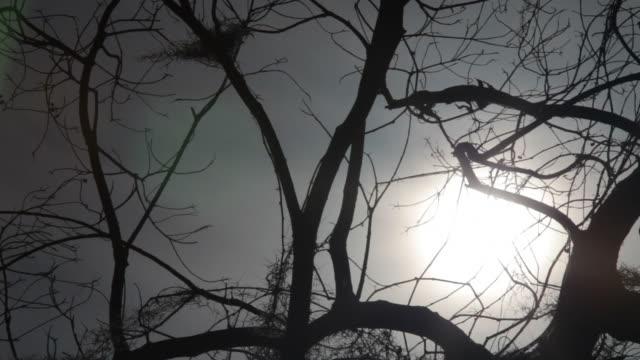Barren Branches video