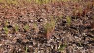 Barren Field Panning video