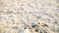 Barren field with salt crystals video
