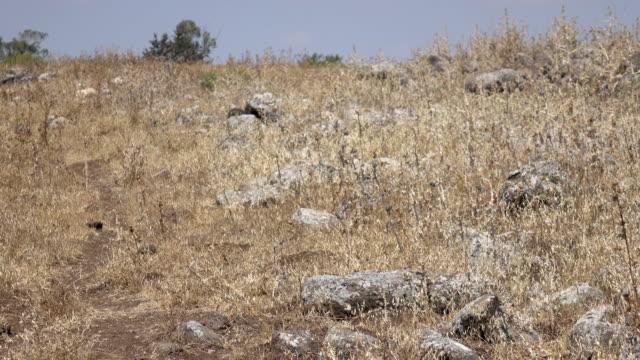 Barren Rocky Field Where Roman Road Was in Israel video