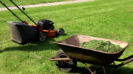Barrow on meadow with cut grass and worker man cut lawn with mower. FullHD video
