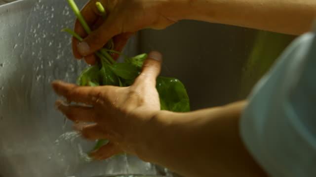Basil leaves under water flow. video