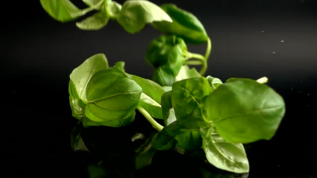 Basil leaves with water drops falling onto black surface video