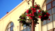 Basket of flowers hanging on the pole. video