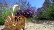 Basket of Lavender video