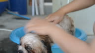 Bathing dogs video