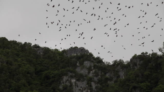 Bats flying over the mountain. video