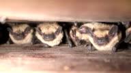 Bats In Batbox video