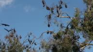Bats video