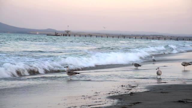 beach and birds video