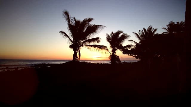 Beach and palm trees with sunset video