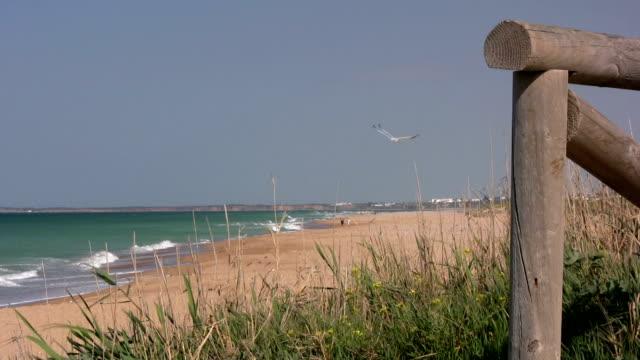 Beach at Cadiz video