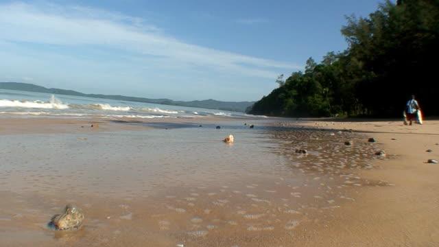 Beach comber video