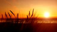 beach grass, sunset, sea video