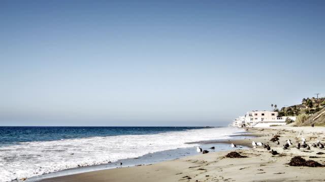 Beach in america video