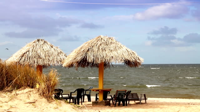 Beach in Marajo Island in north of Brazil video