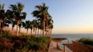 Beach Palms trees video