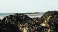 Beach Rocks and Seaweed video