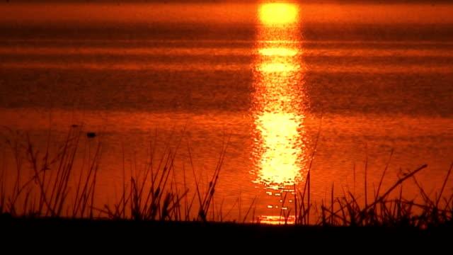 Beach Sunset video