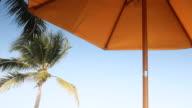 Beach umbrella and coconut tree video