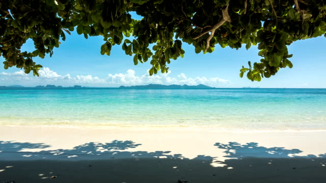 Beach under shadow of tree video