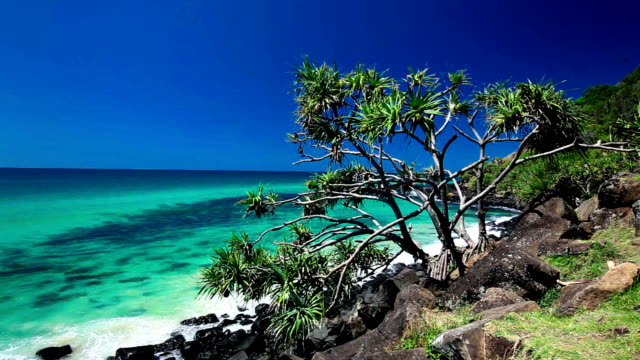 Beach view with a tree in Burleigh Heads National Park, Gold Coast, Australia video