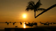 Beach with Sunset Silhouette of Boats and Coconut Palm Tree video