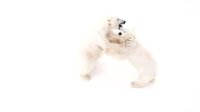 Bear cub video