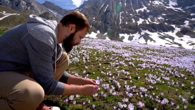 Bearded man gathers wild crocuses video