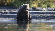 bears fishing video