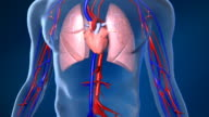 Beating Human Heart with Blood Flow video