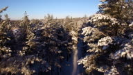 Beautiful aerial view of snow-covered forest video